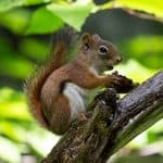 How to Get Rid of Chipmunks | The Ultimate Guide