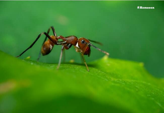 What Ants Attracted To (1)