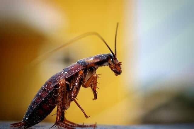 What Causes Roaches in a Clean Home
