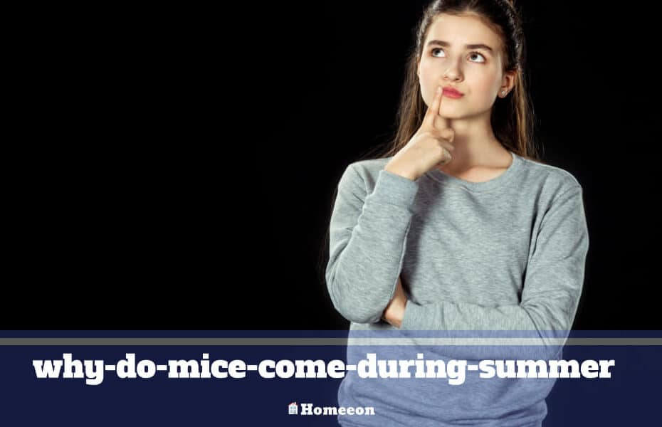 why-do-mice-come-during-summer