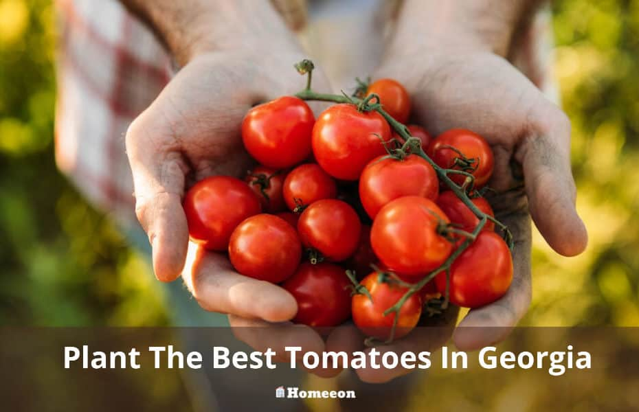 Plant The Best Tomatoes In Georgia