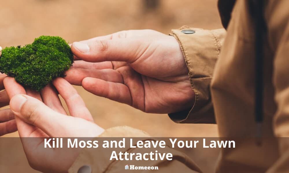 Kill Moss and Leave Your Lawn Attractive