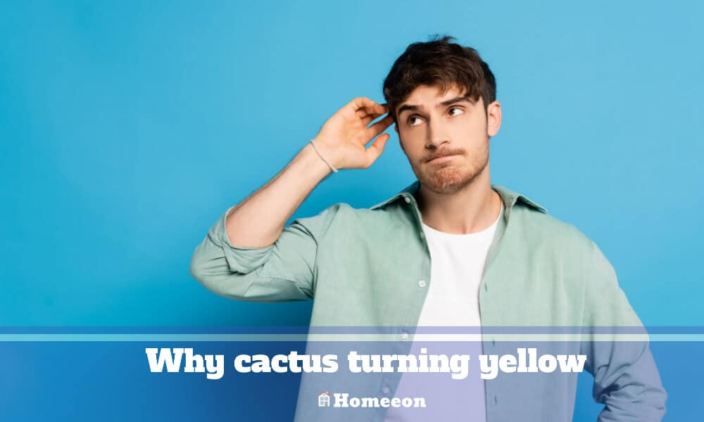 Why cactus turning yellow