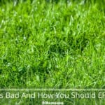 Why Is Crabgrass Bad And How You Should Eliminate It