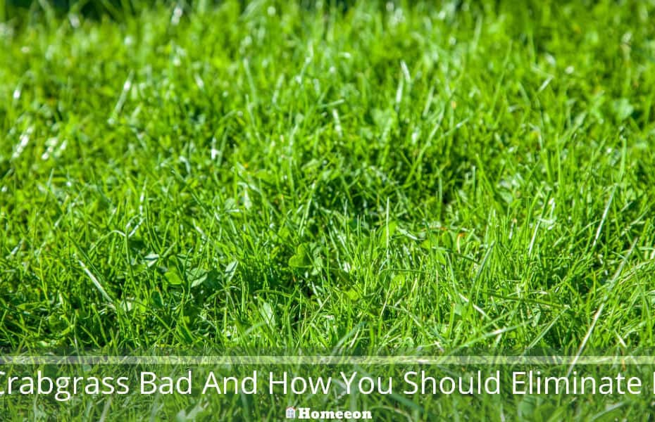 Crabgrass Bad And How You Should Eliminate It