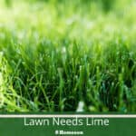 How To Tell Whether Your Lawn Needs Lime