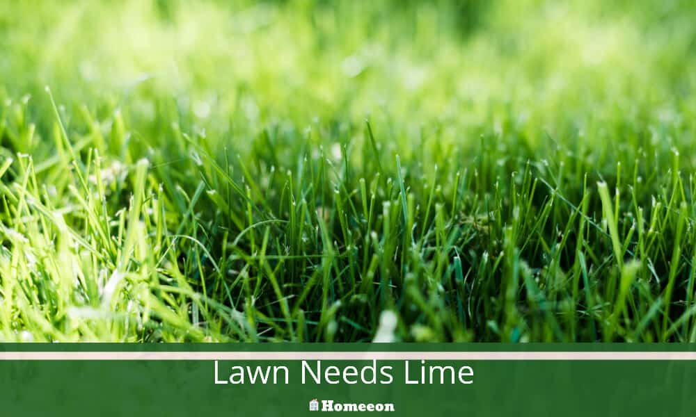 Lawn Needs Lime