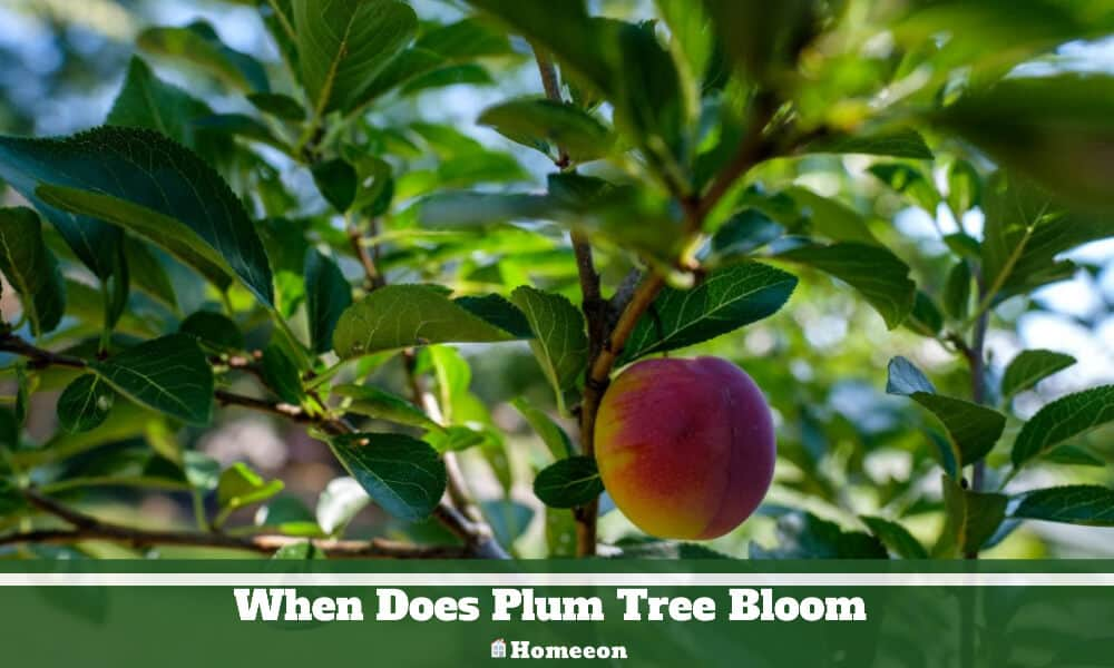 When Does Plum Tree Bloom
