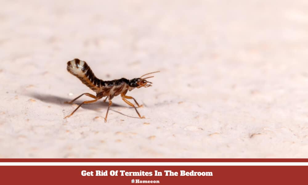 Rid Of Termites In The Bedroom