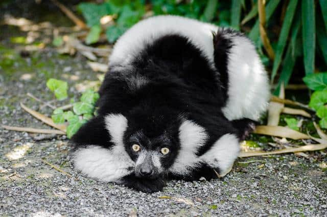Questions about Skunks removal.jpg