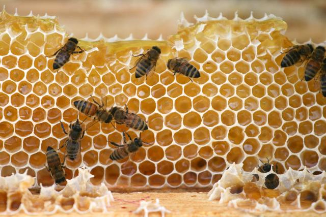 what-group-is-honey