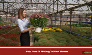 Day To Plant Flowers
